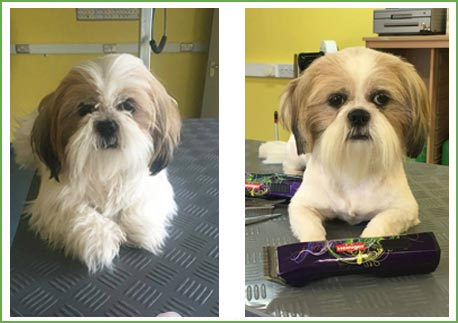 Two cute doggies who have been groomed at Ballyharvey