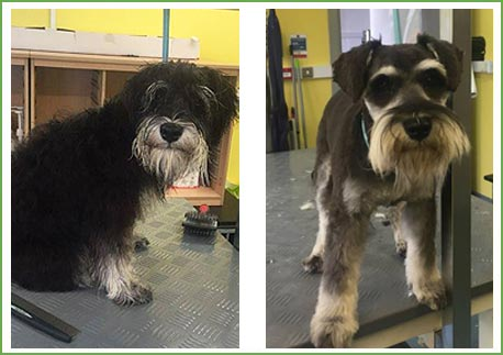 Two newly groomed dogs at Ballyharvey