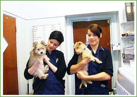 Two veterinary nurses at Firmount Veterinary Clinic holding dogs