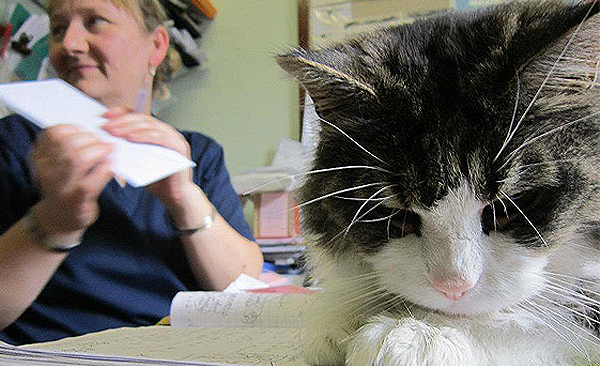 Firmount Veterinary Reception complete with cat on desk